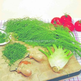 Fennel Florence - Pack of 50 seeds