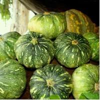 Pumpkin - Pack of 20 seeds