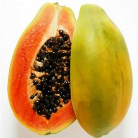 Papaya Red Lady Hybrid F1 Packet of 20 Seeds