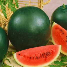 Watermelon - Sugar Baby Packet of 20 Seeds