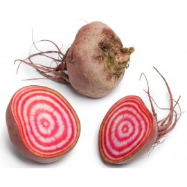 Beet Chioggia Packet of 50 Seeds