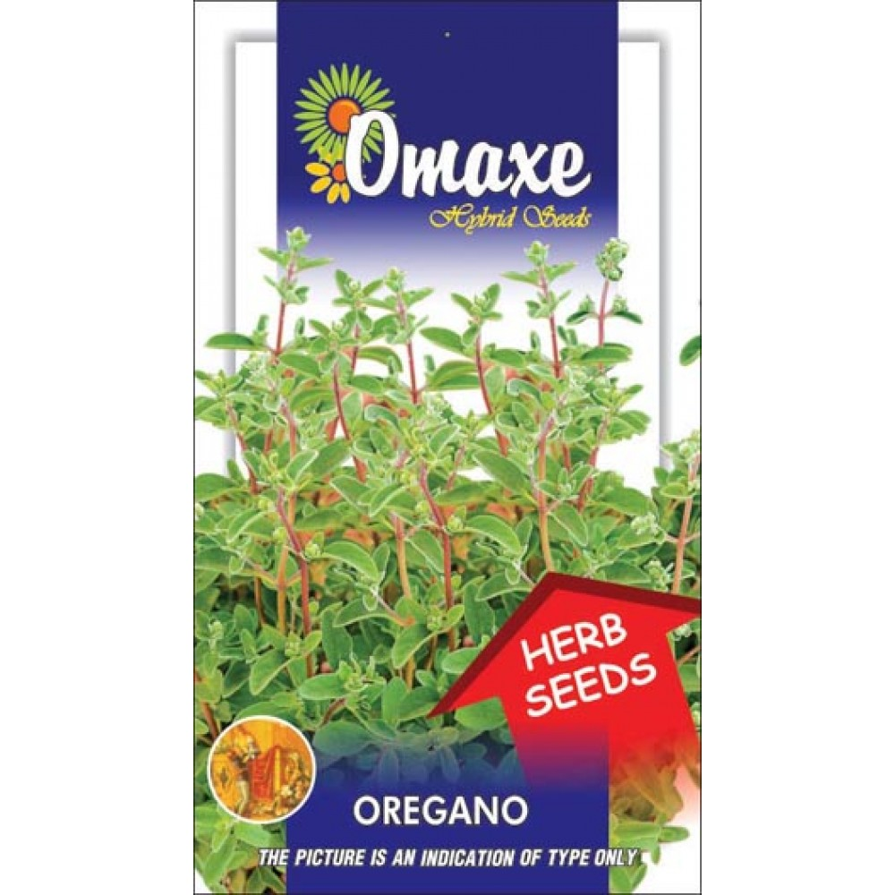 how to grow oregano from seed in india