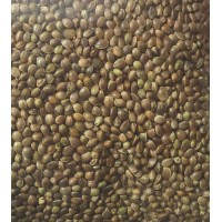 Organically Grown HEMP Seeds 200g