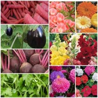 Biocarve All Garden Flower and Vegetable seeds Kit - 9 Pkts