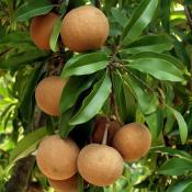 Gardening Fruit Seeds